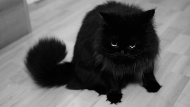 تفسير حلم القط الاسود في المنام لابن سيرين