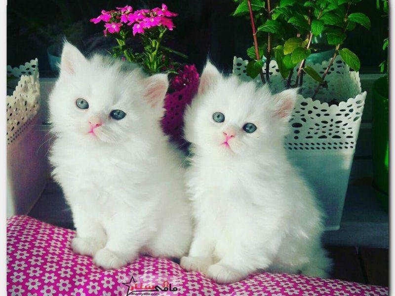 تفسير رؤية القط في المنام للعزباء والمتزوجة والحامل