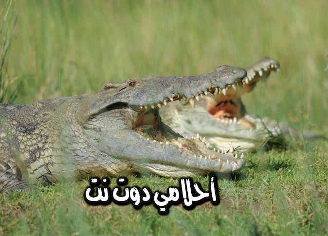 تفسير حلم قتل التمساح للمتزوجة والعزباء في المنام حلمت انه تمساح هجم عليه