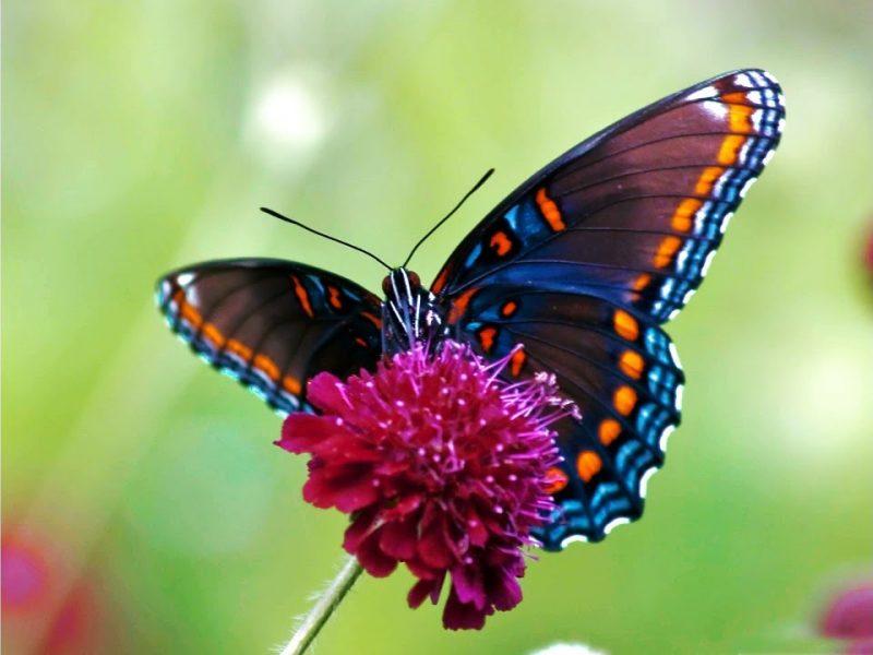 تفسير رؤية الفراشة في المنام
