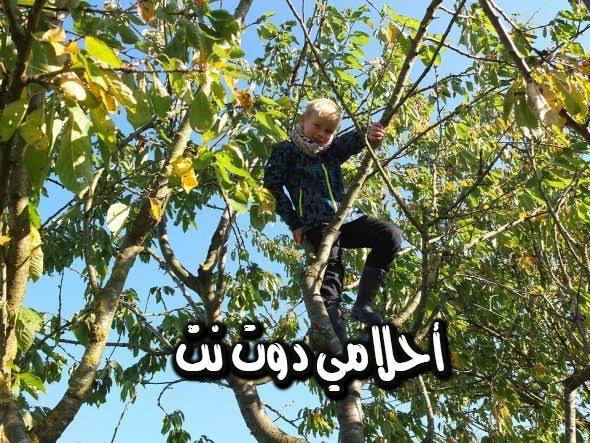 تفسير تسلق الشجرة في المنام للعزباء والرجل والمتزوجة