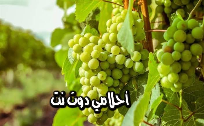 تفسير رؤيا العنب الأخضر في المنام