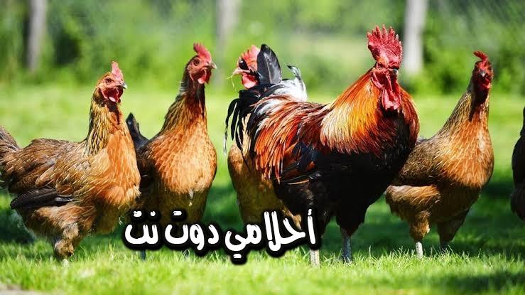تفسير رؤية الدجاج والبيض في المنام للعالم ابن سيرين