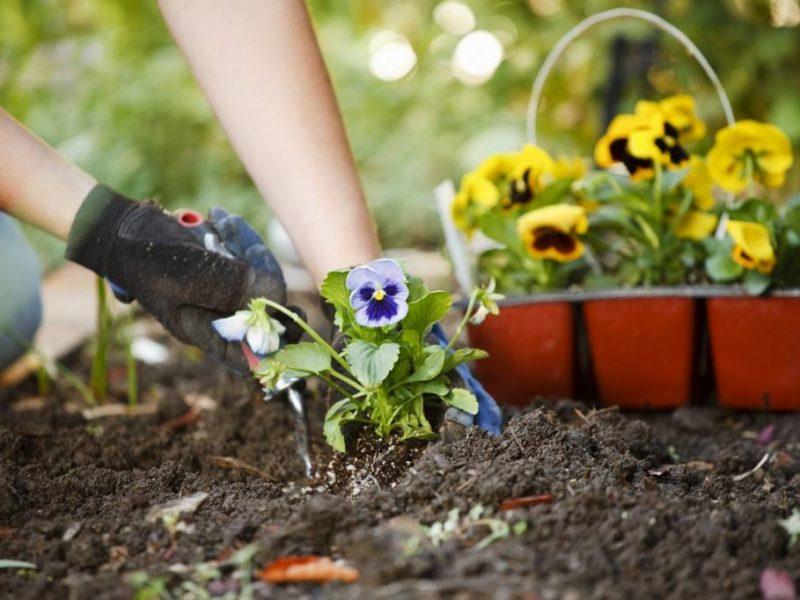 تفسير رؤية زراعة المحصول وحصاده في المنام