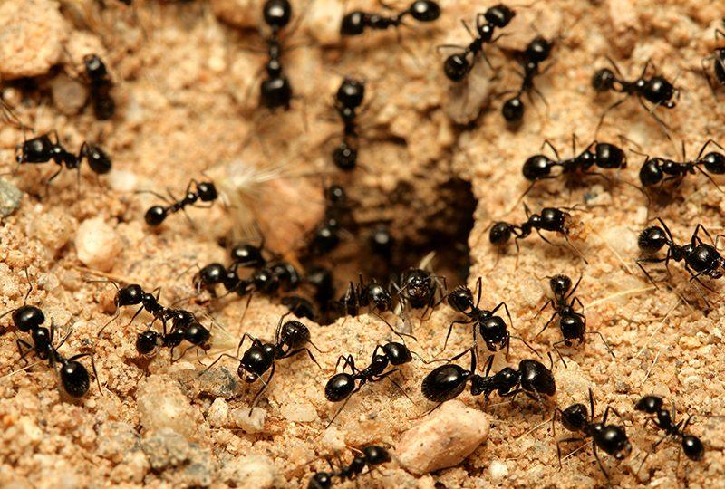 تفسير رؤية النمل في المنام