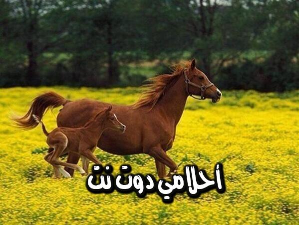 معنى الحصان البني في المنام