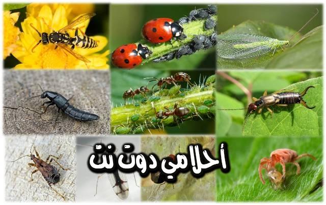 تفسير رؤية الحشرات الزاحفة أو الطائرة في المنام