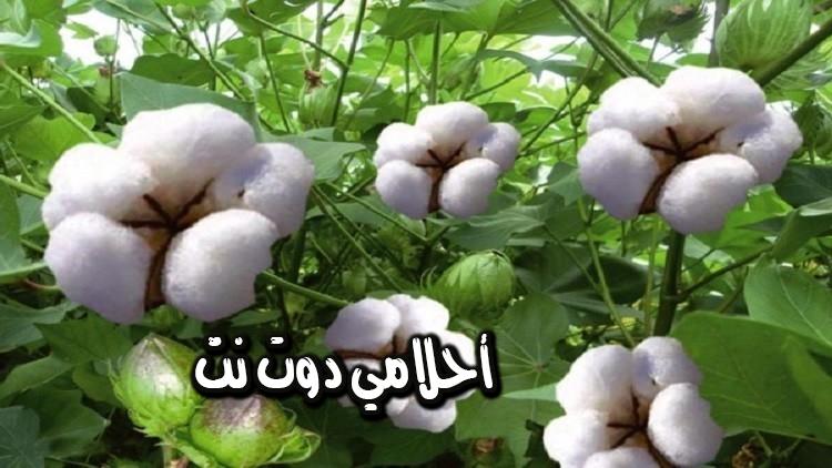 تفسير رؤية تناول ثمار نبات اللفت في المنام