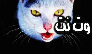 تفسير رؤية القطط والهرر في المنام ( الحلم )