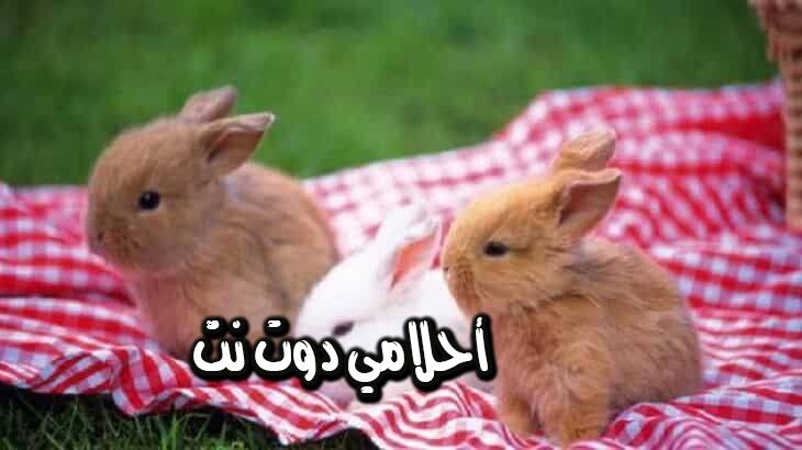 تفسير رؤية حيوان الأرنب في المنام