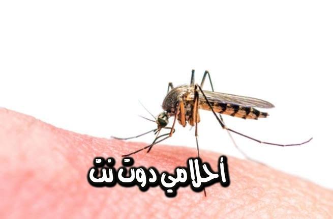تفسير رؤية حشرات البعوض في المنام