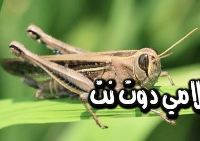 تفسير رؤية حشرات الجراد في المنام