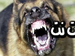تفسير رؤية الكلب المسعور في المنام