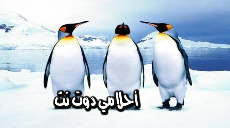 تفسير رؤية طائر البطريق في المنام