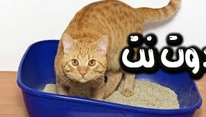 تفسير رؤية براز القطة في المنام