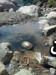 تفسير رؤية جدول الماء العذب في المنام