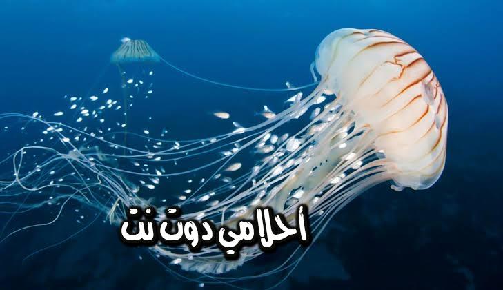 تفسير رؤية قنديل البحر في المنام