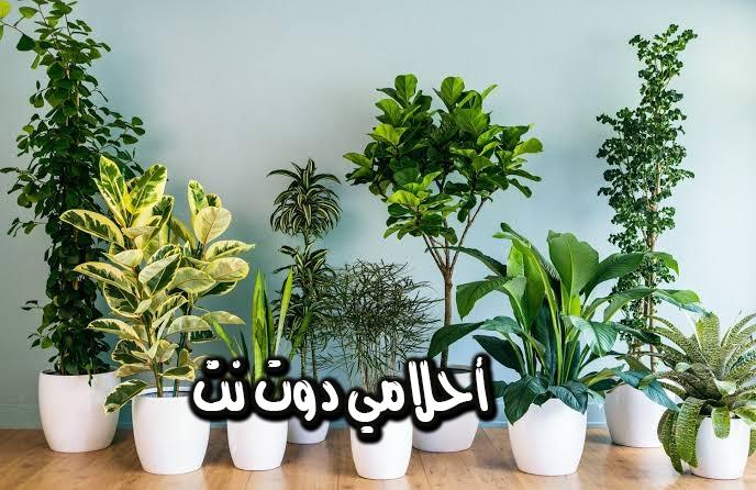 تفسير رؤية نباتات الزينة في المنام