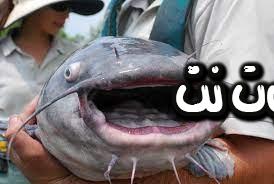 سمك القرموط في المنام للمرأة المتزوجة - صيد السمك من البئر في المنام - سمك القرموط في المنام