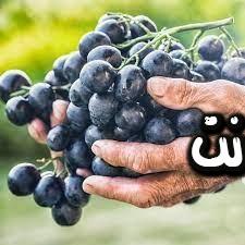 تفسير رؤية العنب الأسود بالمنام - تناول العنب الاسود والابيض بالمنام - تناول العنب بدون غسيل بالمنام