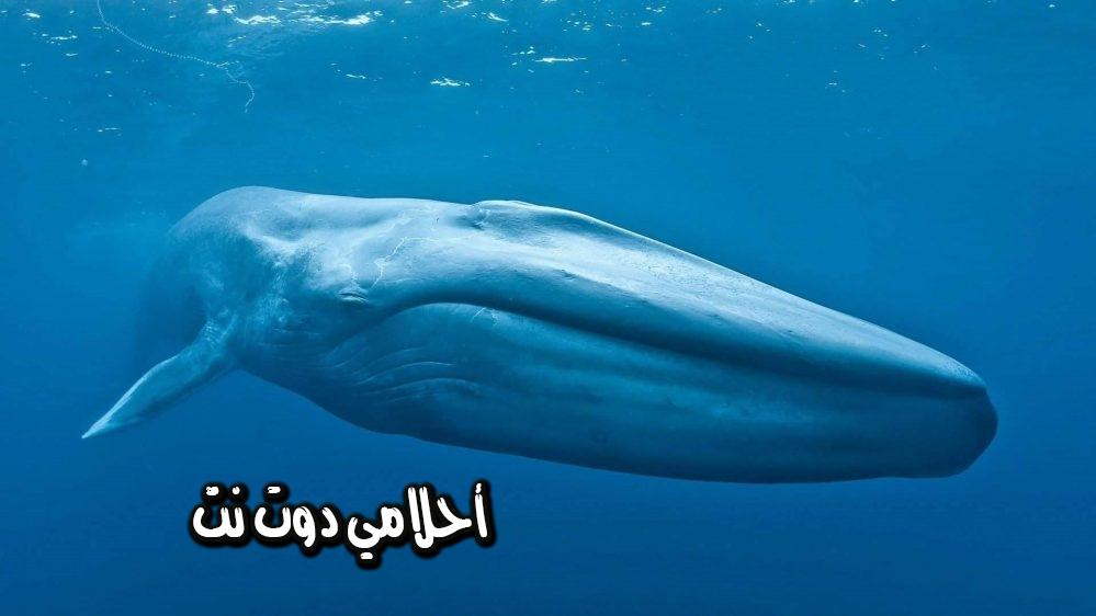 تفسير رؤية الحوت في المنام - حلمت انه الحوت بلاحقني في المنام - حلم محاولة الحوت اكلي في المنام
