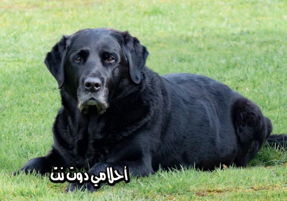 حلمت اني بركض وراء كلب بالمنام - حلمت انه كلب بلاحقني بالمنام - تفسير رؤية الكلب في المنام