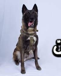 تفسير رؤية الكلب في المنام - حلمت كلب شرس يهاجمني في المنام - حلمت كلب اليف يهاجمني في المنام