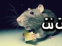 تفسير رؤية الفأر في الحلم - حلمت انه الفأر هاجمني في المنام - حلمت الفأر قفز علي في المنام