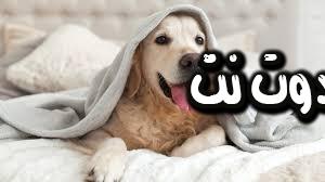 تفسير حلم الكلب في المنام - حلمت كلب شرس يهاجمني في المنام - حلمت كلب اليف يهاجمني في المنام